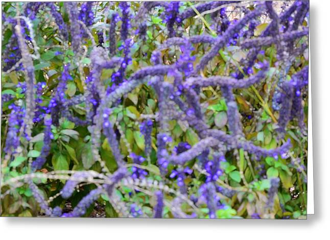 Cultivation Paintings Greeting Cards - Purple wild flowers 1 Greeting Card by Lanjee Chee