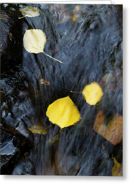 Quaking Aspen Leaves In The South Ponil Greeting Card by Maresa Pryor