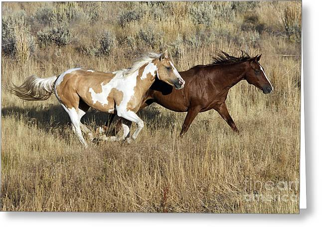 Quarter Horse Greeting Cards - Quarter Or Paint Horses Greeting Card by M. Watson