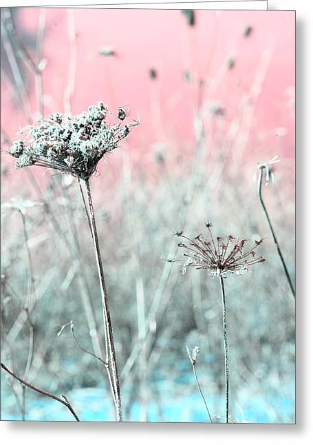 Pink Flower Prints Greeting Cards - Queen Annes Lace Greeting Card by Bonnie Bruno