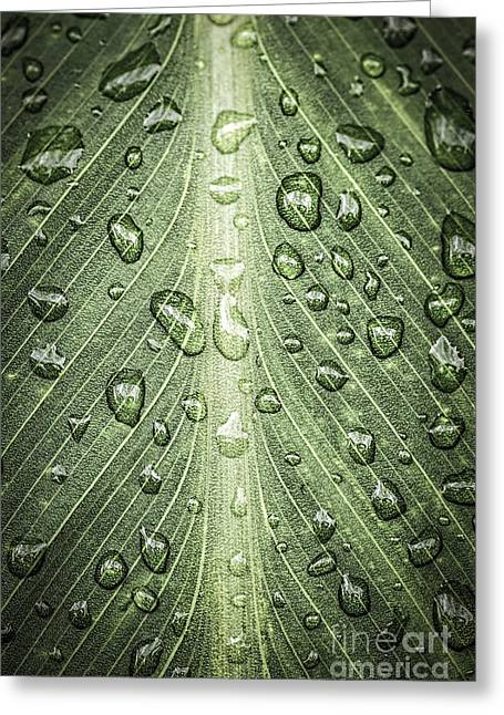 Droplet Greeting Cards - Raindrops on green leaf Greeting Card by Elena Elisseeva