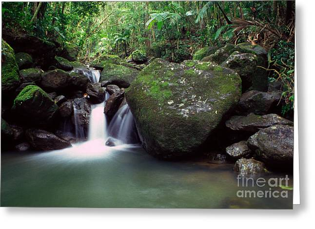 Puerto Rico Greeting Cards - Rainforest Waterfall Greeting Card by Thomas R Fletcher