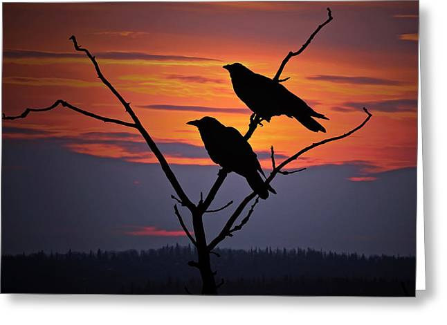 2 Ravens Greeting Card by Ron Day