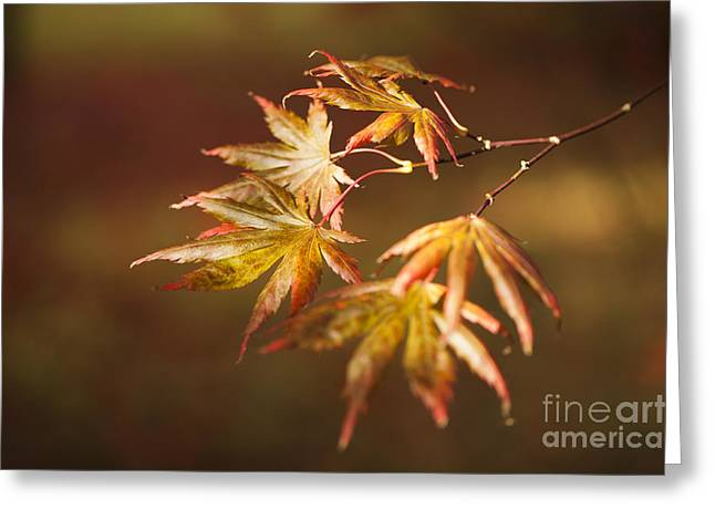 Turning Leaves Greeting Cards - Reaching For The Sun Greeting Card by Anne Gilbert