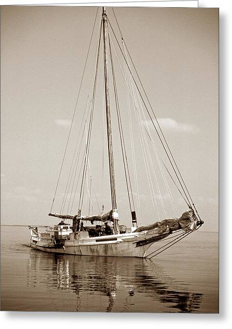 Sailboat Images Greeting Cards - Rebecca T Ruark Greeting Card by Skip Willits