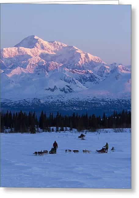 Husky Greeting Cards - Recreational Dog Mushing In Denali Greeting Card by Jeff Schultz
