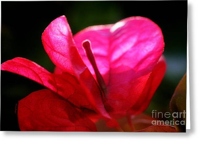 Red Leaves Greeting Cards - Red Greeting Card by Cheryl Young