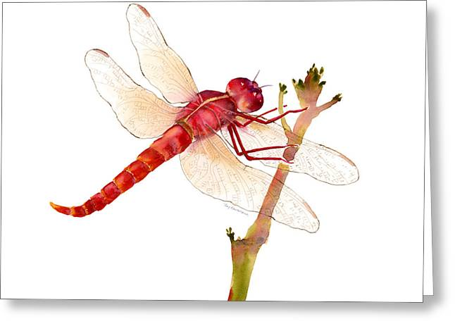 Dragonflies Greeting Cards - Red Dragonfly Greeting Card by Amy Kirkpatrick