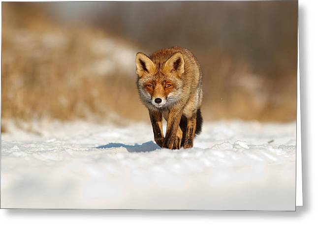 Autumn In The Netherlands Greeting Cards - Red Fox in the Snow Greeting Card by Roeselien Raimond