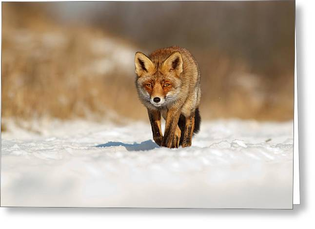 Red Fox In The Snow Greeting Card by Roeselien Raimond