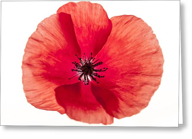 From Above Greeting Cards - Red poppy flower Greeting Card by Elena Elisseeva