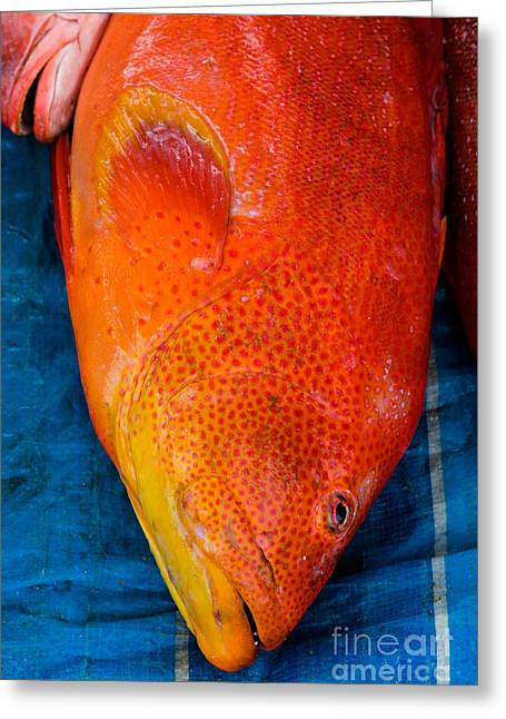 Red Snapper Greeting Cards - Red Snapper At Market Greeting Card by Tim Holt
