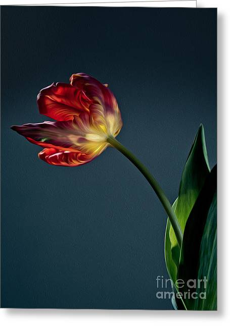 Tulipa Greeting Cards - Red Tulip Greeting Card by Nailia Schwarz