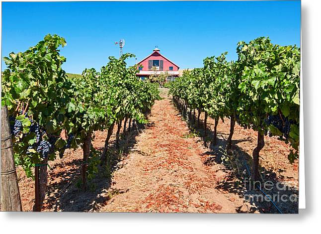 Viticulture Greeting Cards - Red Wine Barn - Beautiful view of wine vineyards and a Red Barn in Napa Valley. Greeting Card by Jamie Pham