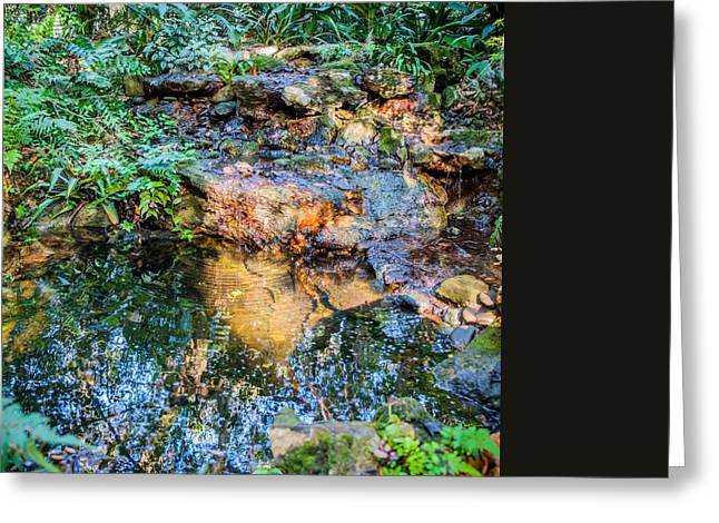Louis Ferreira Art Greeting Cards - Reflections Greeting Card by Louis Ferreira