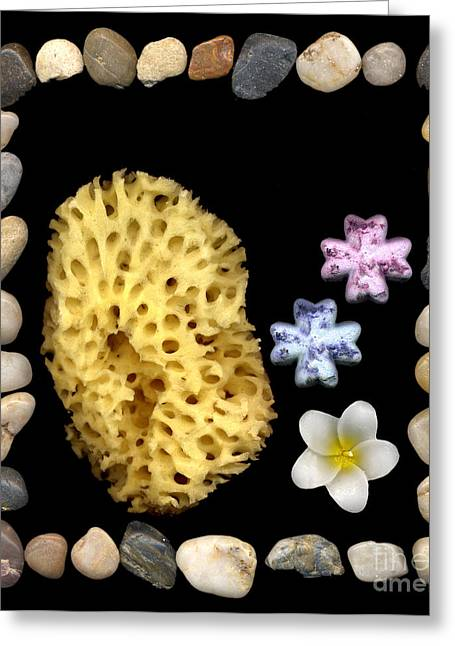 Flower Bombs Greeting Cards - Relaxation Greeting Card by Jacqui Martin