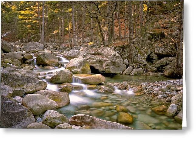Water Flowing Greeting Cards - Restonica Valley in Corsica Greeting Card by Jon Ingall