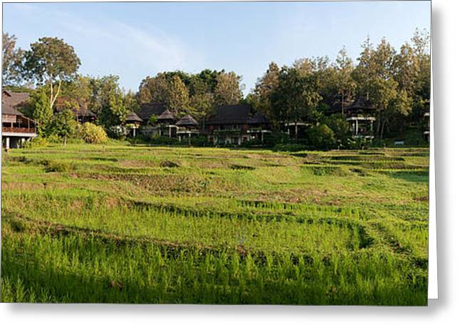 Paddy Greeting Cards - Rice Fields In Front Of Villas, Four Greeting Card by Panoramic Images
