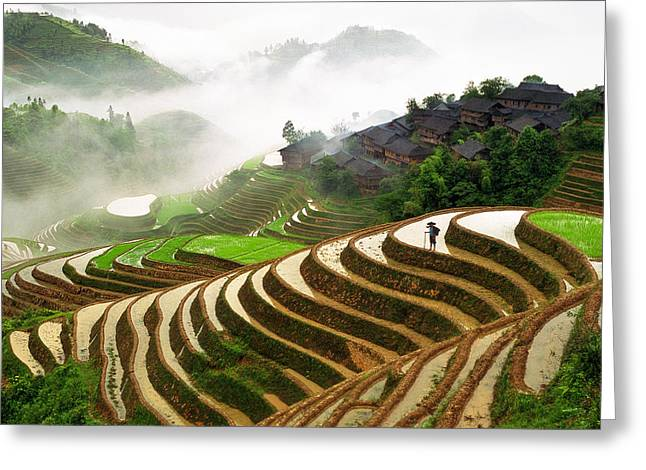Rice Terraces Greeting Card by King Wu
