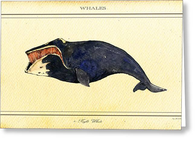 Ocean Mammals Digital Art Greeting Cards - Right whale Greeting Card by Juan  Bosco