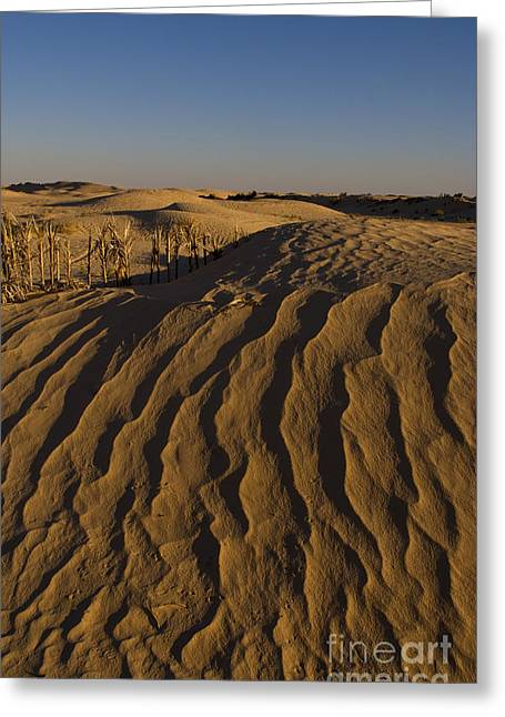 Sand Pattern Greeting Cards - Ripples In Sahara Desert Sand Greeting Card by Bill Bachmann