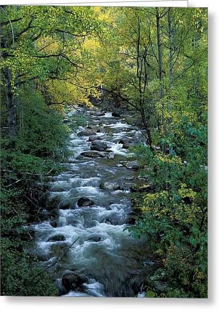 Autumn Greeting Cards - River Greeting Card by Anonymous