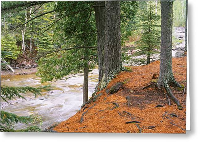 Pine Needles Greeting Cards - River Flowing Through A Forest Greeting Card by Panoramic Images