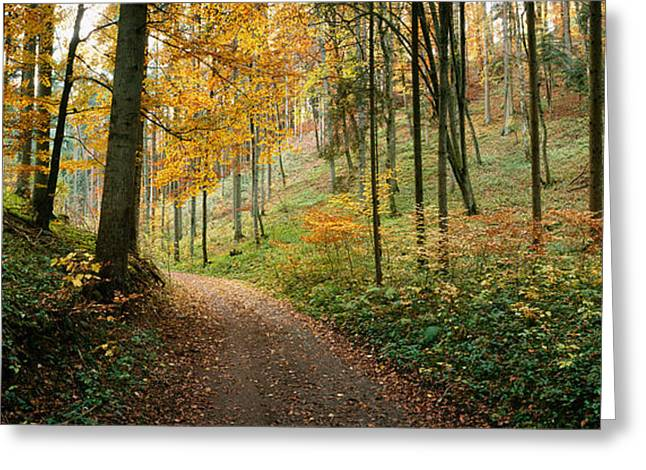 Fallen Leaf Greeting Cards - Road Passing Through A Forest Greeting Card by Panoramic Images