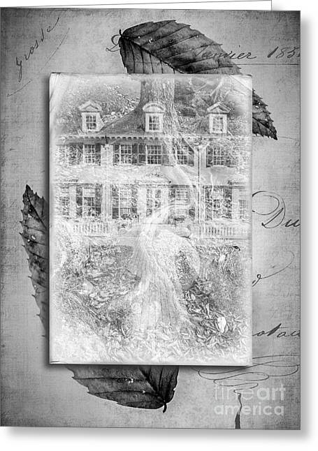 Retro-montage Greeting Cards - Roots Greeting Card by Edward Fielding