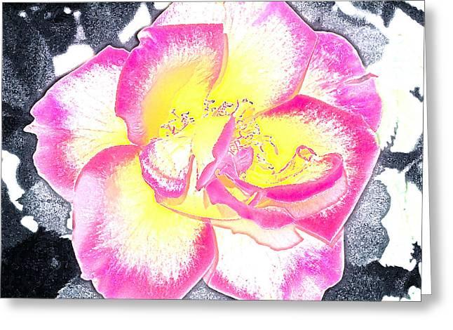 Rose 3 Greeting Card by Pamela Cooper