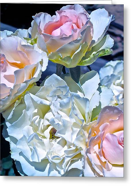Rose 59 Greeting Card by Pamela Cooper