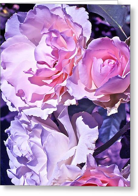 Rose 60 Greeting Card by Pamela Cooper