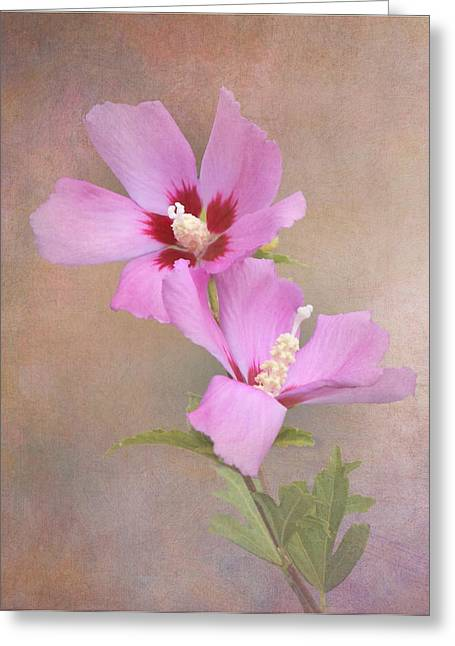 Rose Of Sharon Greeting Cards - Rose of Sharon Greeting Card by Angie Vogel