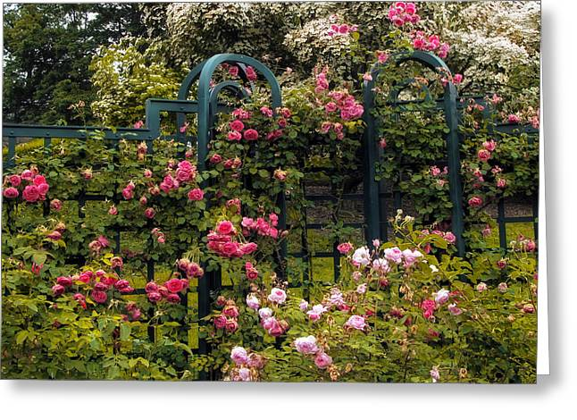 Trellis Greeting Cards - Rose Trellis Greeting Card by Jessica Jenney
