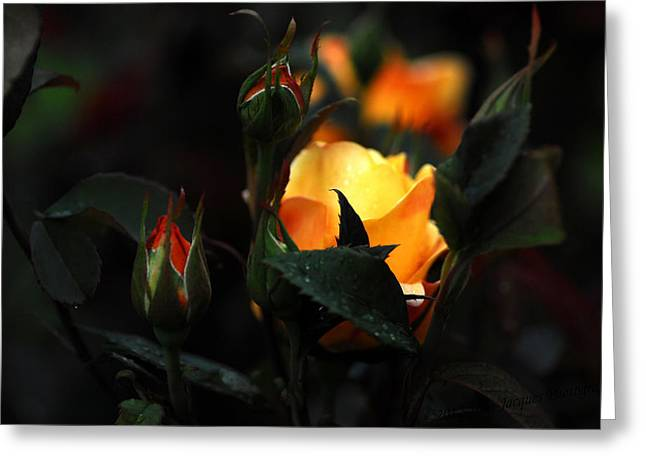 D200 Greeting Cards - Roses Greeting Card by Jean-Jacques Thebault