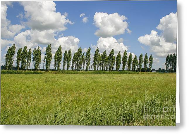 Cumulus Nimbus Greeting Cards - Row of trees in the wind Greeting Card by Patricia Hofmeester