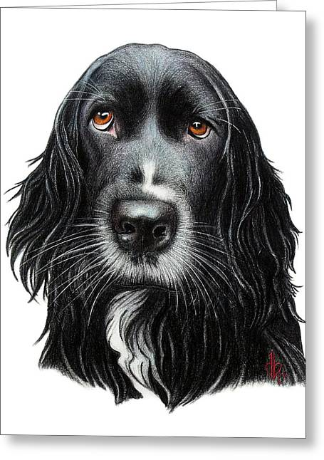 Spaniel Drawings Greeting Cards - Rummy Greeting Card by Danielle R T Haney
