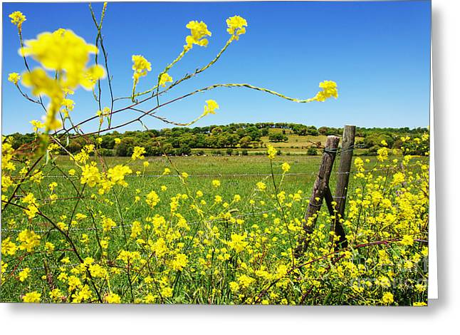 Pasture Scenes Greeting Cards - Rural Landscape Greeting Card by Carlos Caetano