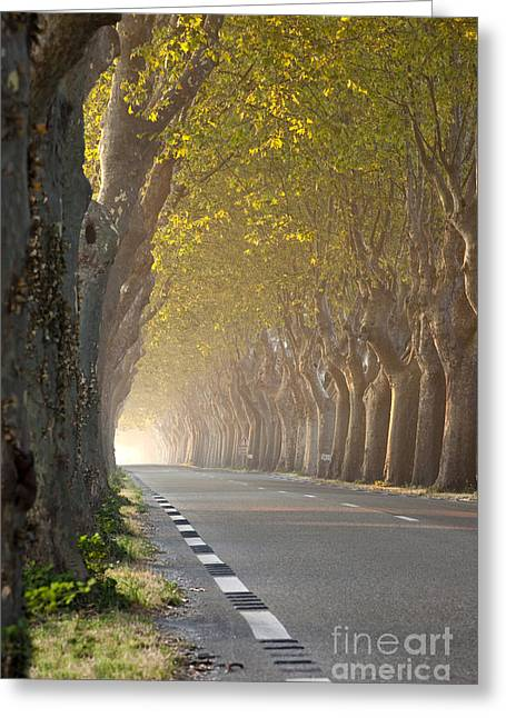 Saint-remy De Provence Greeting Cards - Saint Remy Trees Greeting Card by Brian Jannsen