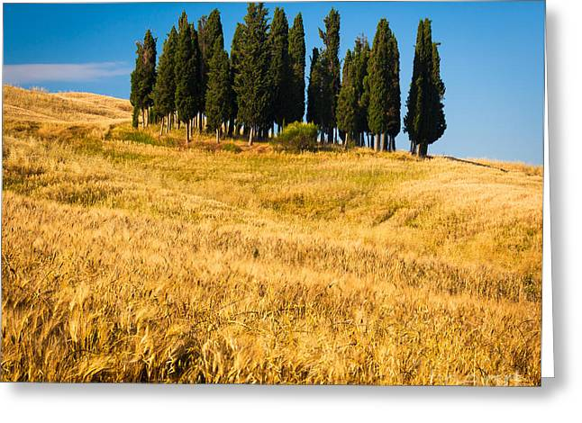Europe Greeting Cards - San Quirico dOrcia Greeting Card by Inge Johnsson