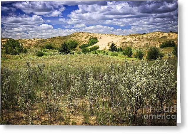 Sand Dunes Greeting Cards - Sand dunes in Manitoba Greeting Card by Elena Elisseeva