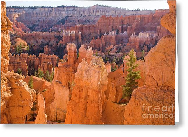 Sandstone Hoodoos Bryce Canyon Natl Park Greeting Card by