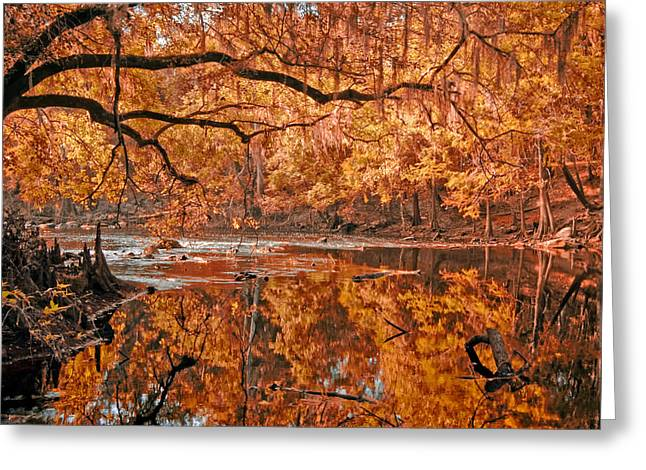 Shades State Park Greeting Cards - Santa Fe River Greeting Card by Rich Leighton