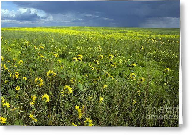 Saskatchewan Prairies Greeting Cards - Saskatchewan Prairie Greeting Card by Mark Newman