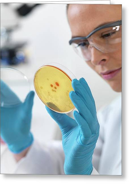 Scientist With Petri Dish Greeting Card by Tek Image