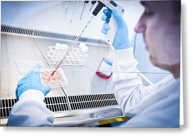 Virologist Greeting Cards - Scientist working in a fume cupboard Greeting Card by Science Photo Library
