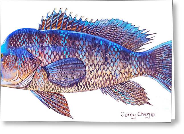 Mackerel Greeting Cards - Sea Bass Greeting Card by Carey Chen
