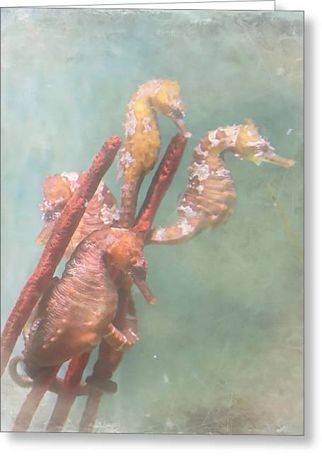 Sea Horse Photographs Greeting Cards - Sea Horses Greeting Card by Angie Vogel