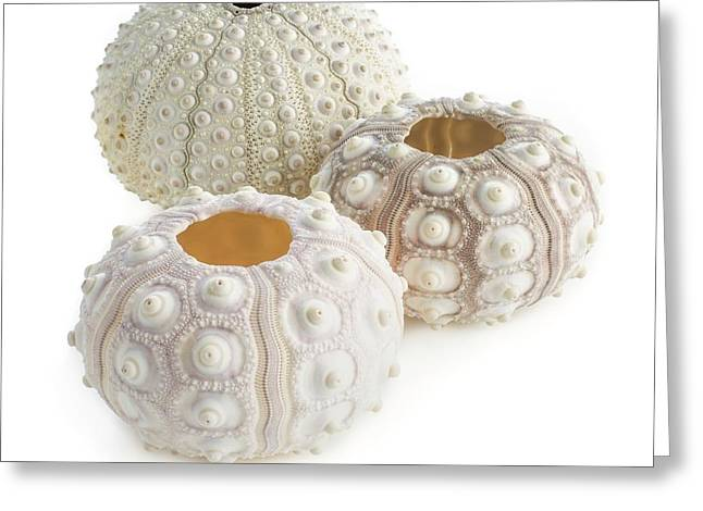 Sea Urchin Shells Greeting Card by Science Photo Library