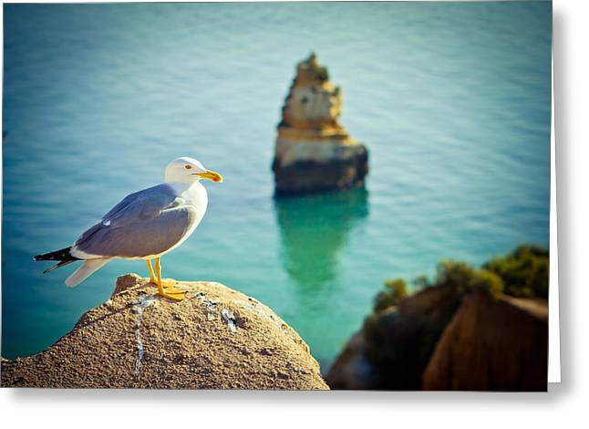 Stones Pyrography Greeting Cards - Seagull On The Rock Greeting Card by Raimond Klavins
